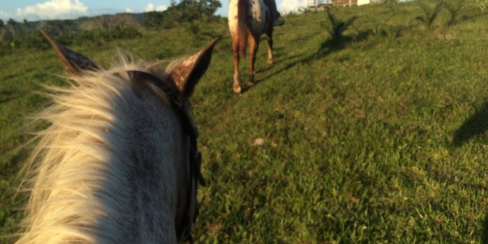 Horse Riding, Xunantunich & Chocolate Making